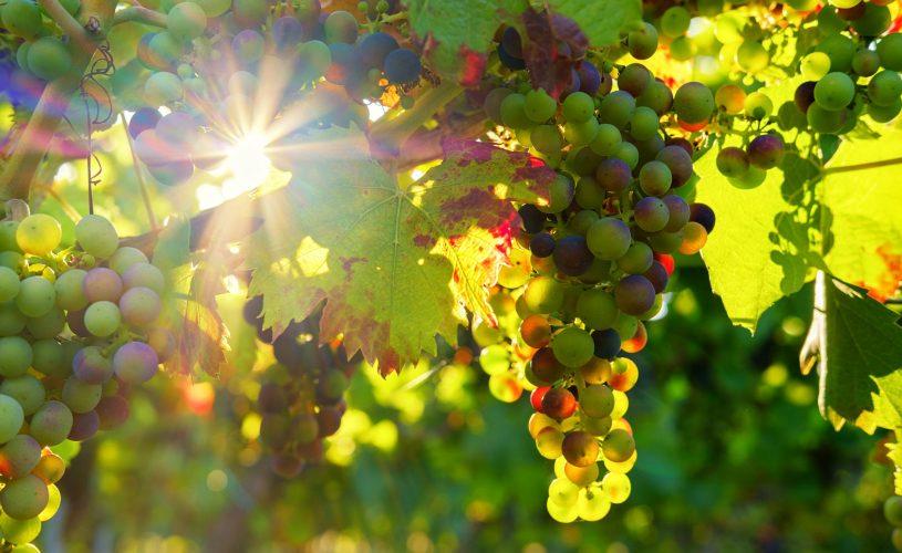 dk villas' Favourite Wines for Autumn