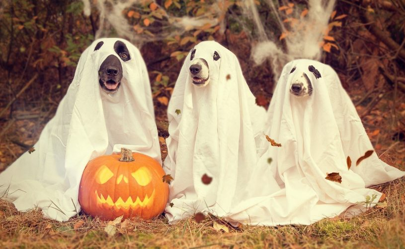 Great Ideas for (a Safe) Halloween in Cape Town!