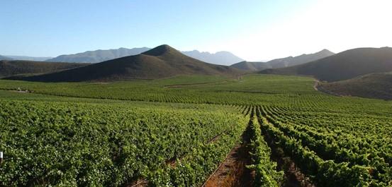 Robertson Wine Valley